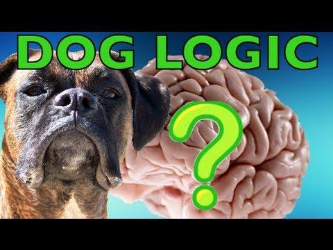 Brock the Boxer: DOG LOGIC!!!
