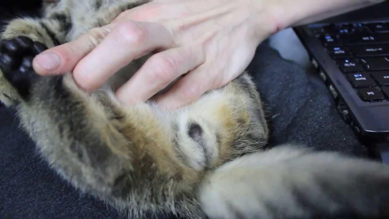 Как определить маленького котенка кот или кошка