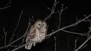 Most Relaxing 8 Hours Owls Sounds - mcz2