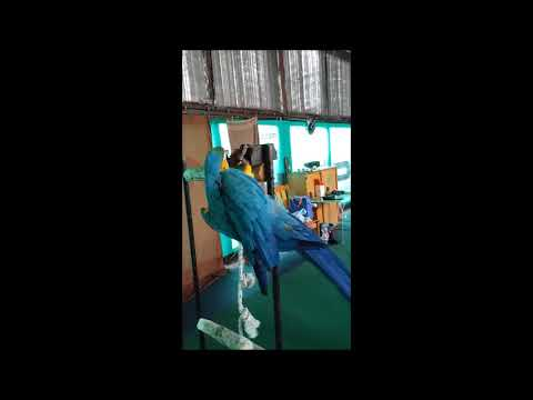 Papagájkiállítás Balatonföldvár V.