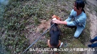 生駒山系、自由の森なるかわ ビリー君、お散歩の途中、遊んでいた女の子...