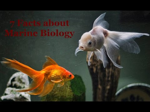 7 Facts about Marine Biology