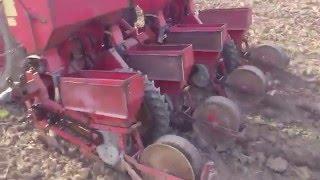 sejanje kukuruza