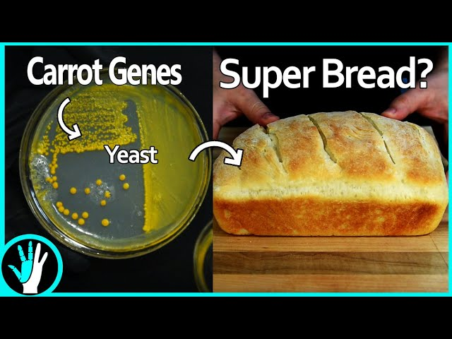 Are Golden Yeast the Future of Nutrition?