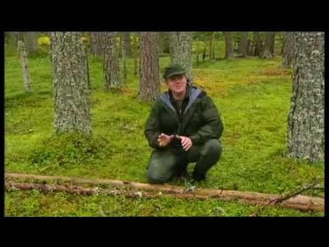 *RAY MEARS* FOUR SEASONS IN BRITAIN