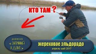 Как поймать жереха. Рыбалка Астрахань Весна Видео