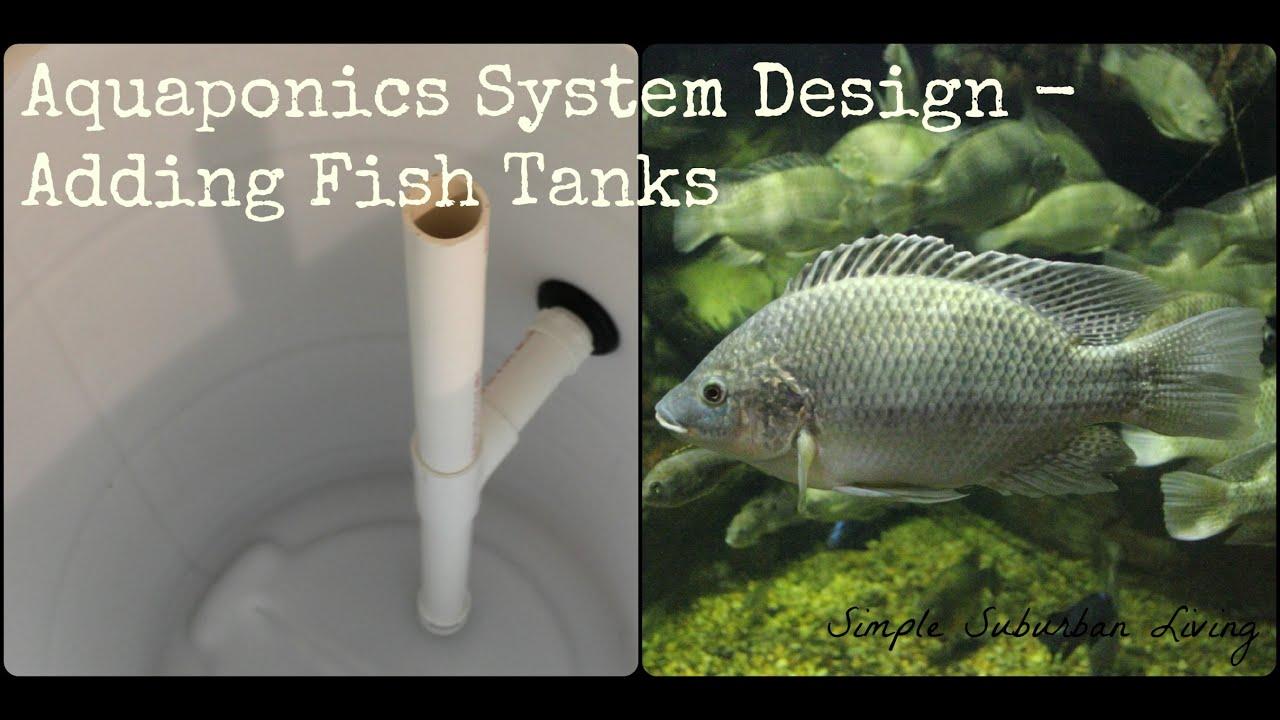 Aquaponics System Design Fish Tanks Solids Lifting