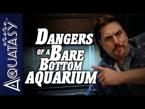Aquatasy - Dangers Of A Bare Bottom Aquarium
