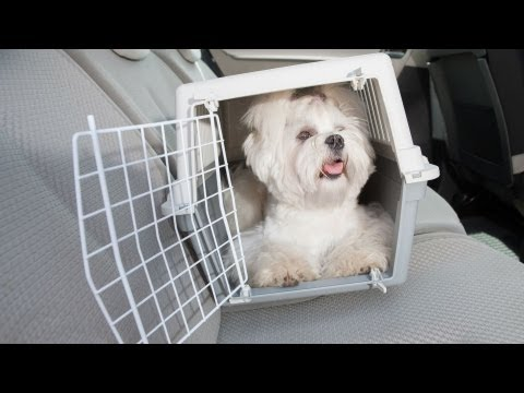 How to Travel with Your Puppy | Puppy Care