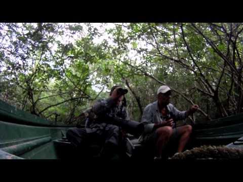 Birds of Venezuela -- 'Venezuela Challenge' - Venezuela Expedition Dec 2011-Jan 2012.mov