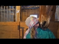 Blindfold Challenge - Guess that Horse!