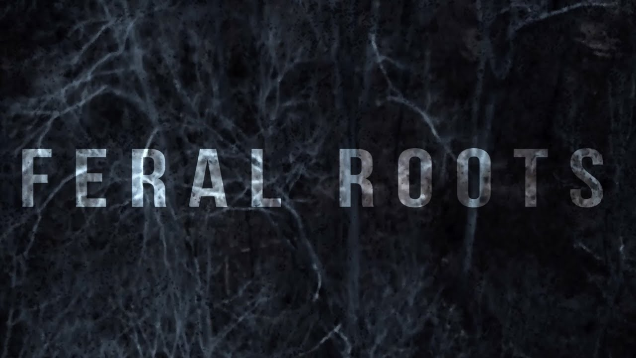f2e43c31bf8 Rival Sons - Feral Roots (Official Visualizer) - YouTube