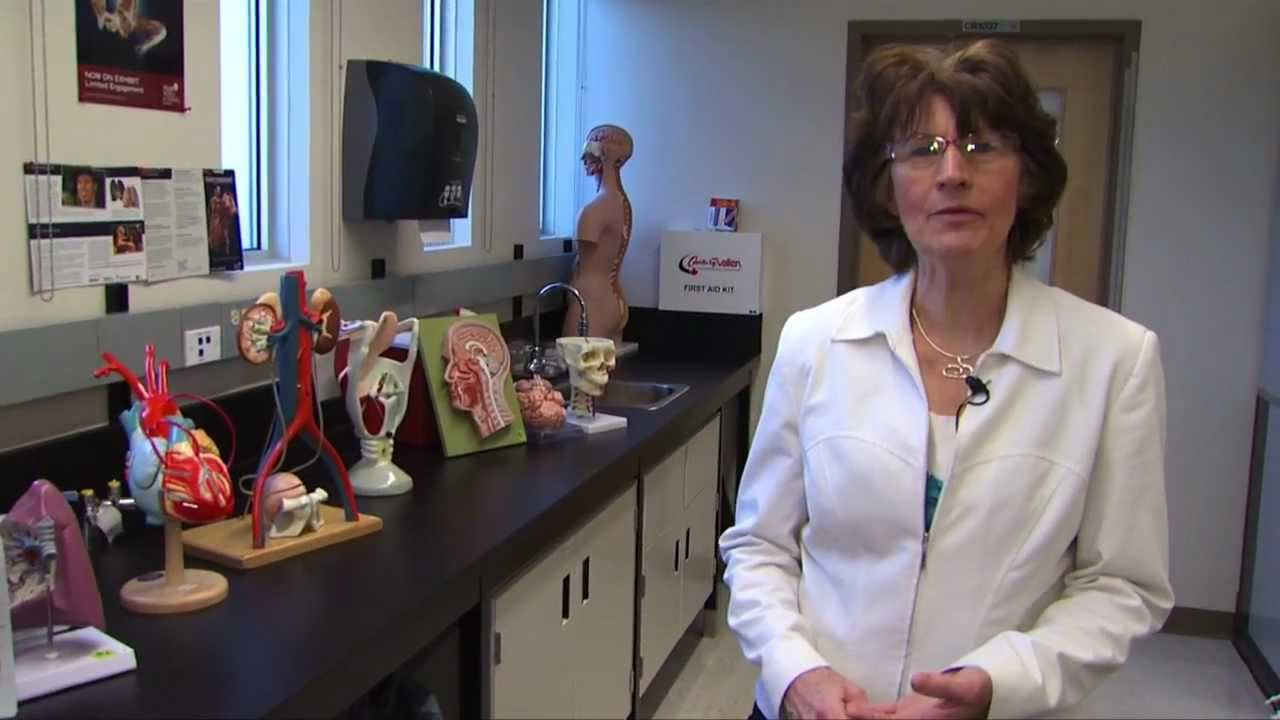Anatomy & Physiology Lab - YouTube