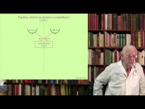 Lecture 4. The Visual System  I-II Structure, Function and Dysfunction