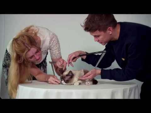 Cat Public Figure Grumpy Cat Is having Own Madame Tussauds Wax Figure