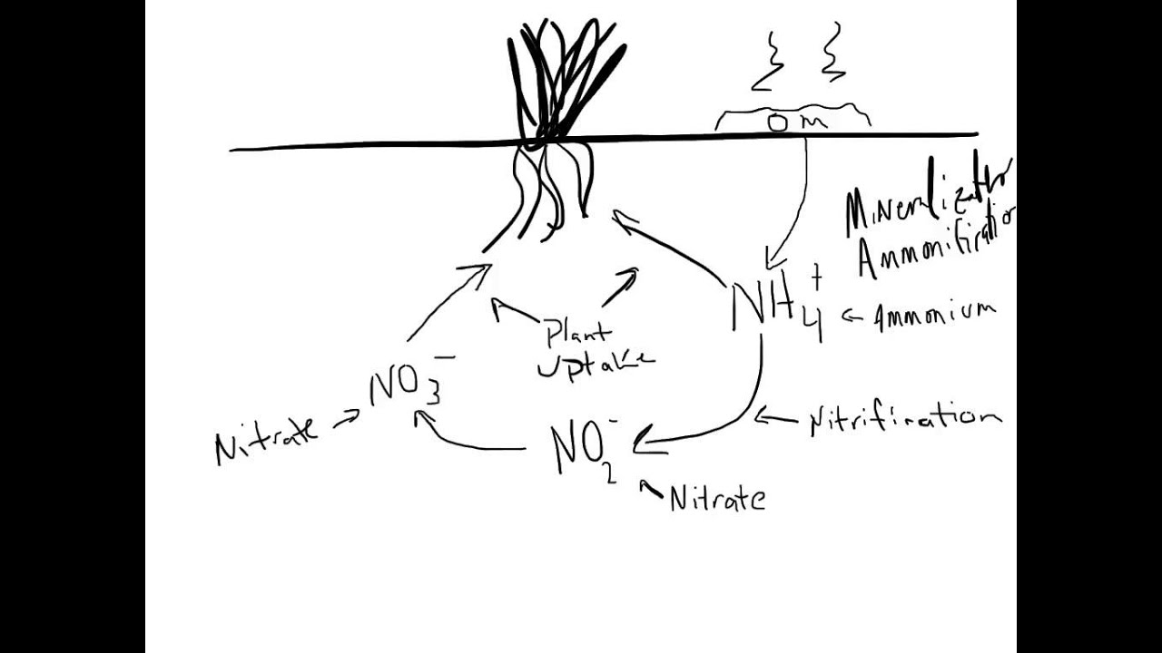 A Simplified Nitrogen Cycle