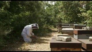 Disparition des abeilles   la fin d'un mystère