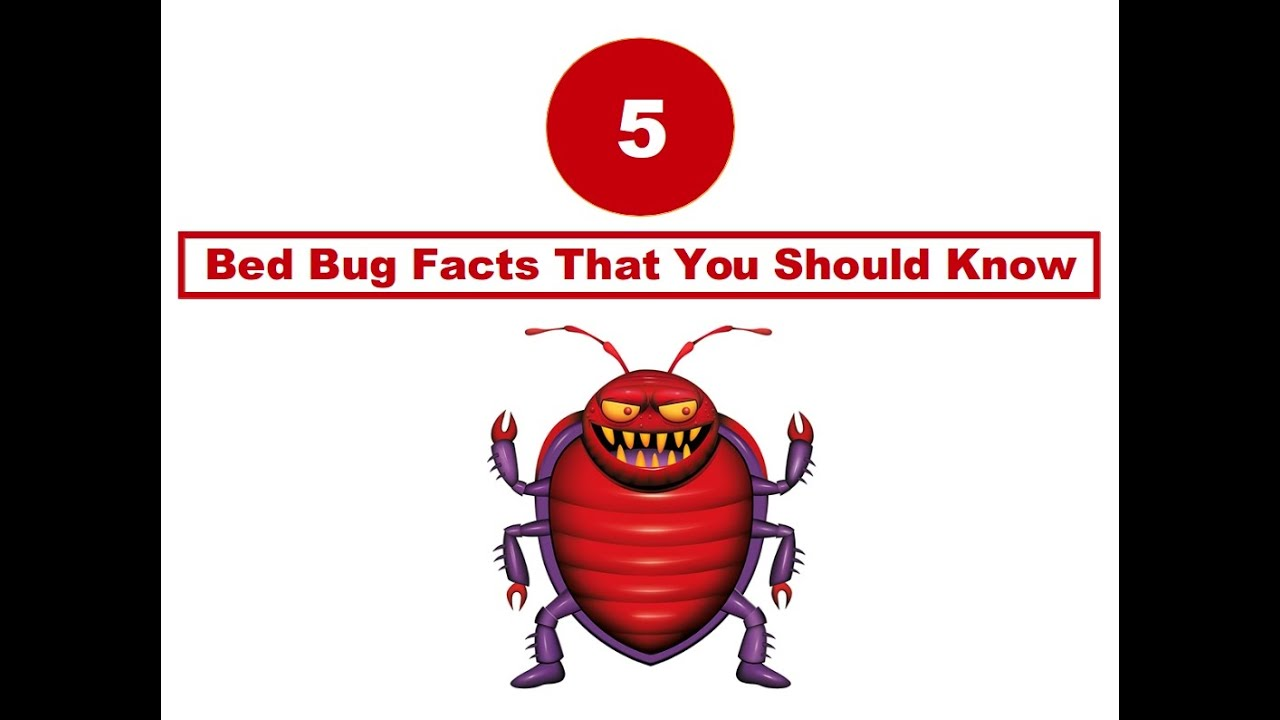 bed featured guide about crazy bug bugs infographic facts