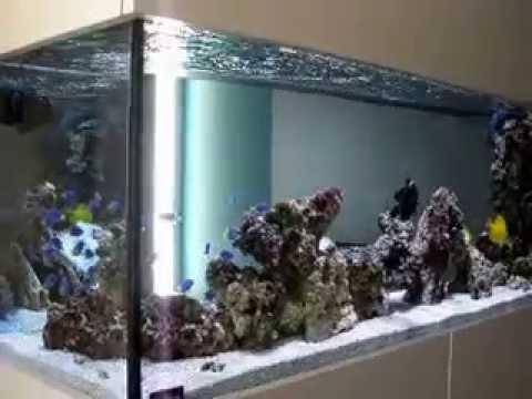 acuario marino 700 litros youtube
