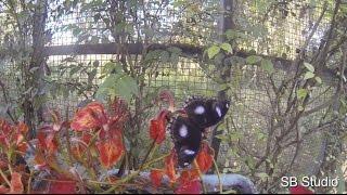 Таиланд. Пхукет. Сад бабочек.(Таиланд. Пхукет. Сад бабочек.Отдыхать и путешествовать классно! Подписывайтесь на канал и будьте в курсе..., 2015-03-04T05:58:28.000Z)