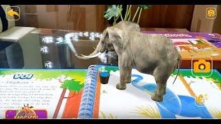 Đồ chơi thực thế ảo MagicBook 4D thế giới động vật sống động như thật vừa học vừa chơi AR mobile
