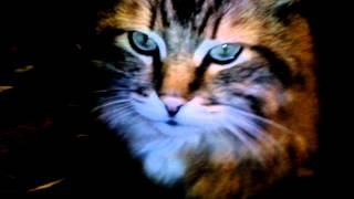 Кот как мягкая игрушка