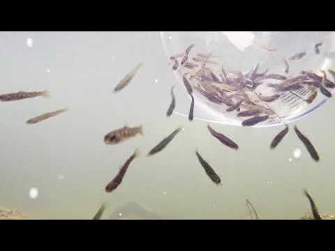 aus der SommerZeit / ein Spaziergang am Meer / Amrumиз YouTube · Длительность: 1 мин11 с