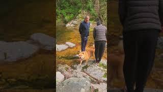 국견협회 진돗개 봉화와 계곡 산책