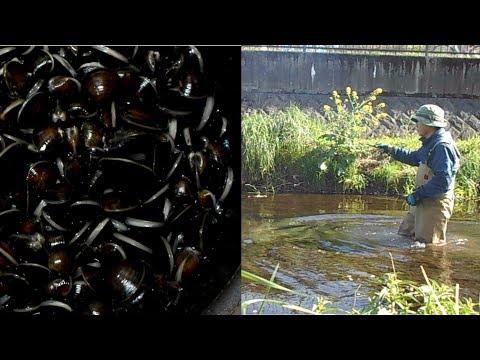 黒目川で天然シジミ自作竿でオイカワ釣れました ヨシノボリくん登場です