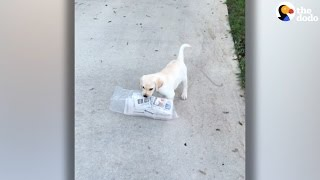 Puppy Struggles To Deliver Newspaper