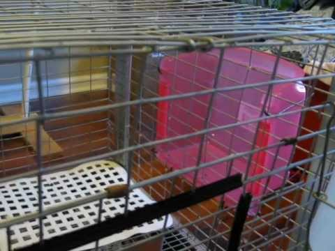 Diy Rabbit Cage Manger And Rest Mat Dollar Store Finds
