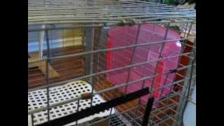 Diy Rabbit Cage Manger And Rest Mat: Dollar Store Finds