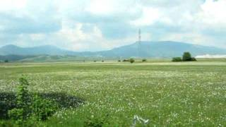 Devojka sa polja zelenih, Zeljko Joksimovic HD