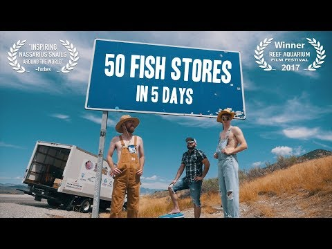 50 Fish Stores in 5 Days - (The Aquarium Hobby) | Short Film