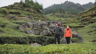Mint meets Green Tea | CCTV English