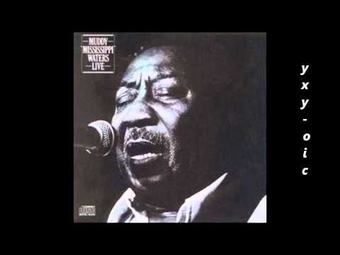 MUDDY WATERS - Mannish Boy (w Johnny Winter)