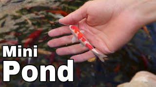 Future MINI POND In MY BACK YARD!! **Baby Fish**