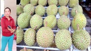 Ghé vựa Sầu riêng tại nhà chị Trang đẹp gái, đã mắt với kho sầu Ri6 vườn nhà trồng