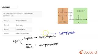 The main lipid components of the plant cell membrane are :-