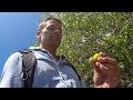 Snake Island Survival Adventure - Day 6: The World's Deadliest Tree
