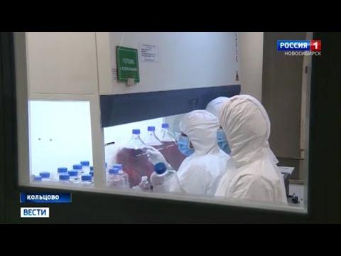 Сибирские ученые начали