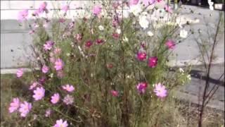 「赤いカンナが咲いていた」安達 明cover