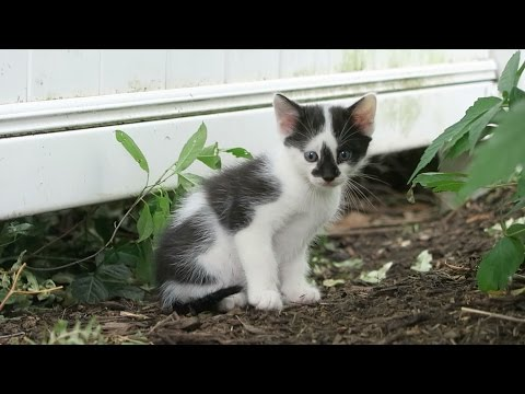 Cute Feral Kitten Gives Me A High Five - Simba and Splash As Kittens