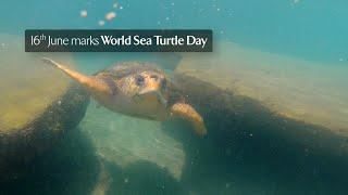 Discover Turtle Conservation with Jumeirah on World Sea Turtle Day 2021