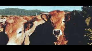 Innov'Action 2016 : Les choix stratégiques d'un élevage de bovins viande sur le causse gardois