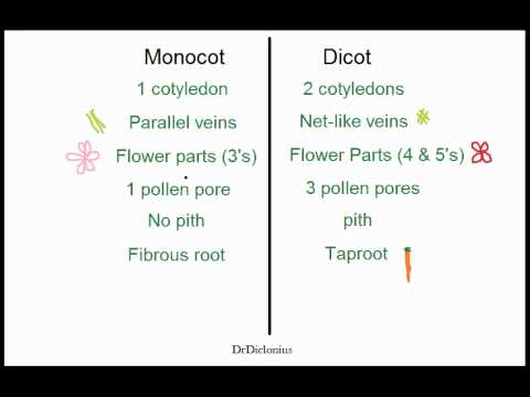 Biology Monocots vs Dicots