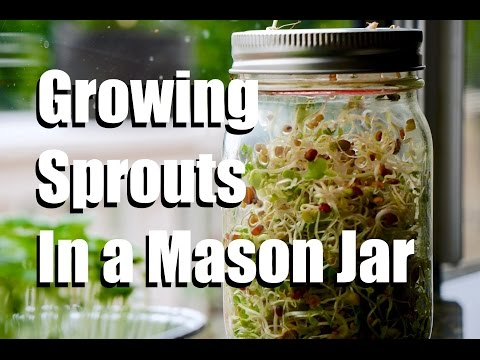 How to Grow Sprouts Indoors in a Mason Jar, No Soil Required // Growing Your Indoor Garden #2