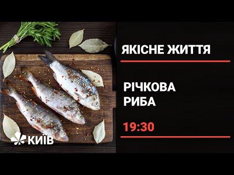 Телеканал Київ: Чи справді свіжа: як вибирати річкову рибу