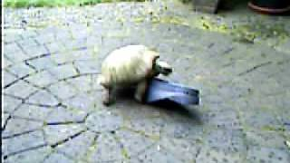 The Tortoise and the Garden Shoe, Part I