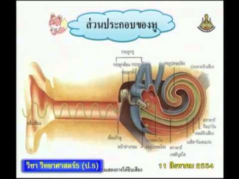 082+540811+scip5+dltv54p+B+ส่วนประกอบของหู, แผนภาพขั้นตอนการได้ยินเสียง